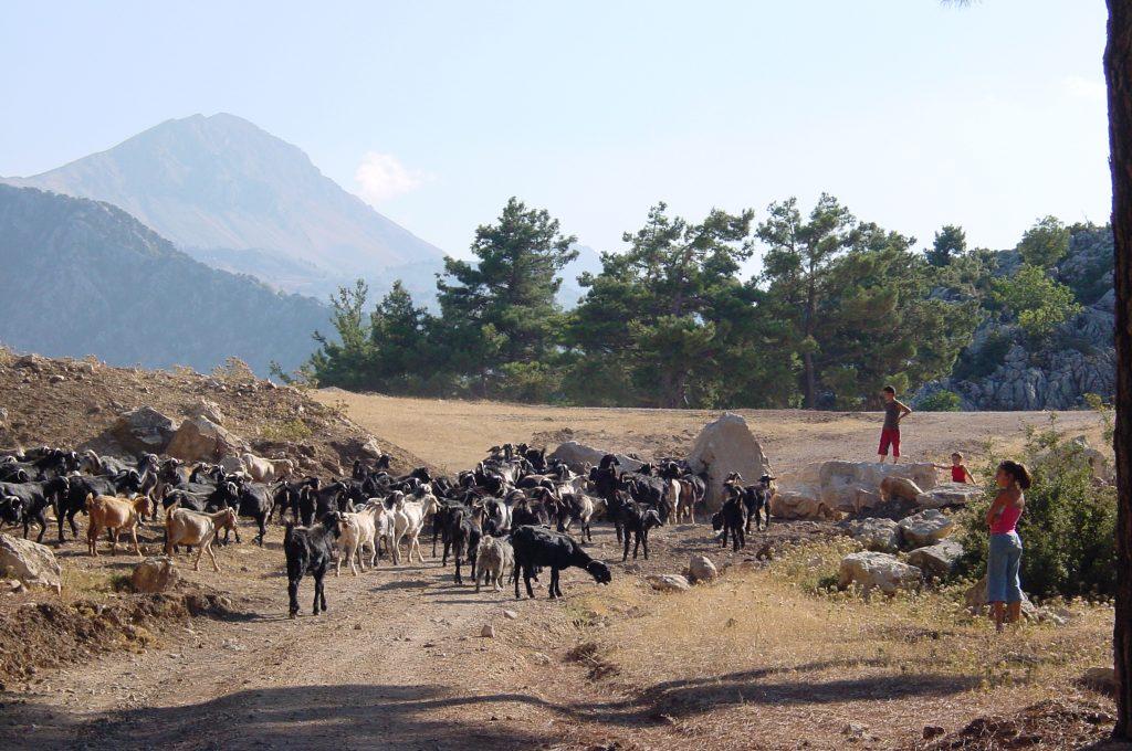 Wandern in Saklikent: Begegnungen mit Hirten und ihren Tieren machen Spaß